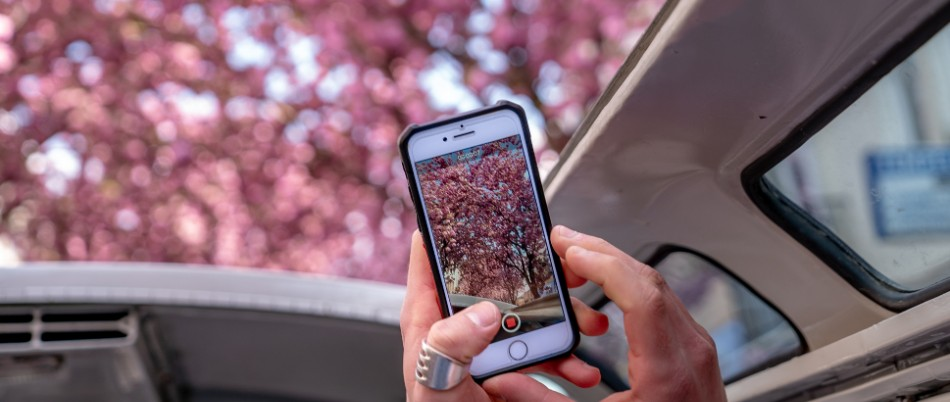 Mobile phone taking photo of cherry blossoms